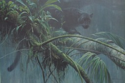panther lurking on a branch in a rainy jungle