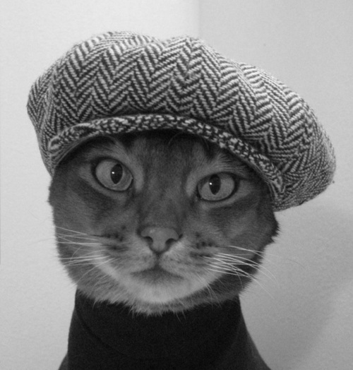 cat wearing a beret