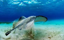 Cayman_Islands_1920x1200_large_102210