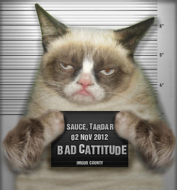funny cat image of a bad-ass looking cat mugshot