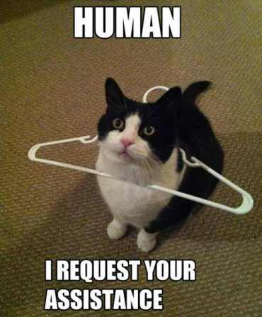 funny meme of cat wtih hanger stuck over its head