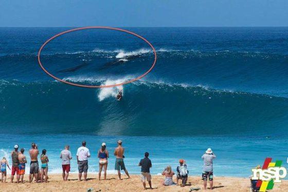 killer whale orca surfing the Banzai Pipline Oahu Hawaii